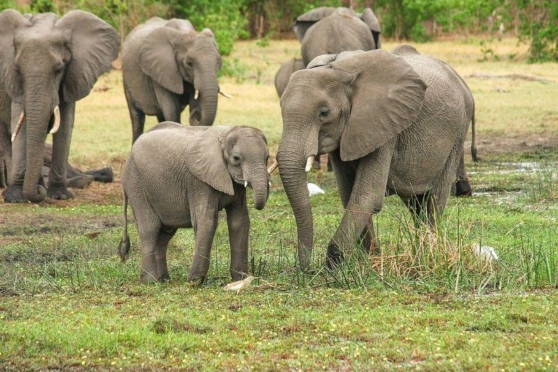 Embarazos más extraños del reino animal